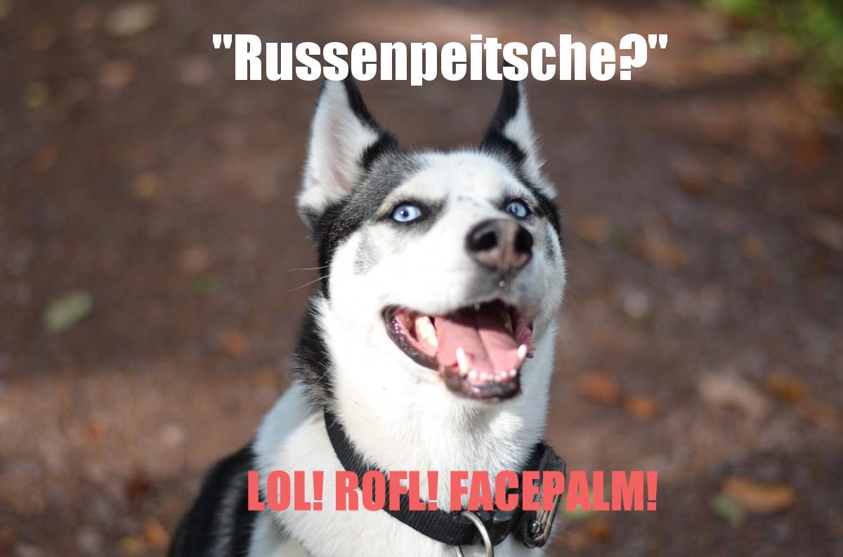 Russenpeitsche? Da lacht der Husky!